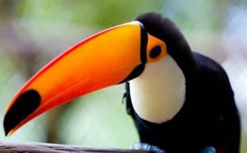 rainforest-bird