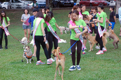 ATV Miss Asia Pageant Malaysia finalists walk the dogs at charity photo shoot at Central Park, Bandar Utama, PJ