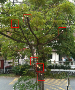 Red boxes show where the Landscaping workers chopped the healthy tree