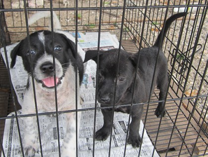 pups for adoption copy