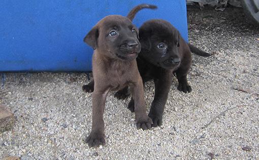 Two of Aunty Mei's pups