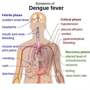 Malaysia-dengue-death-spike 3 copy