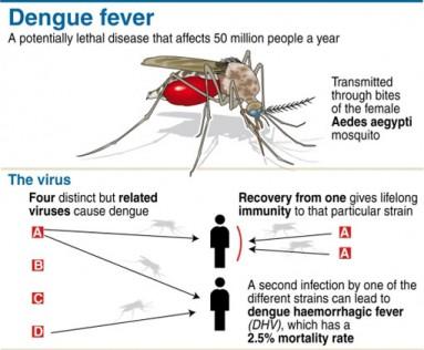 Malaysia-dengue-death-spike 4