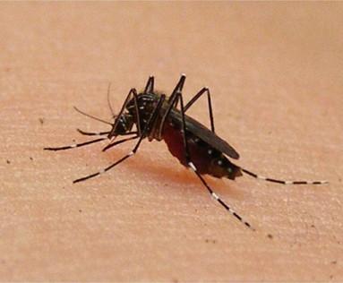 Malaysia-dengue-death-spike 5