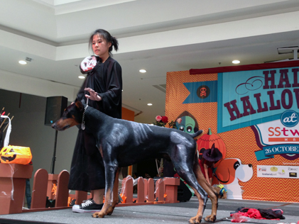 A doberman and owner take the catwalk