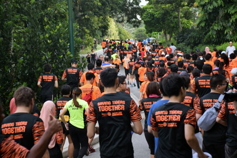 Runners participate in the Wild Tiger Run 2016